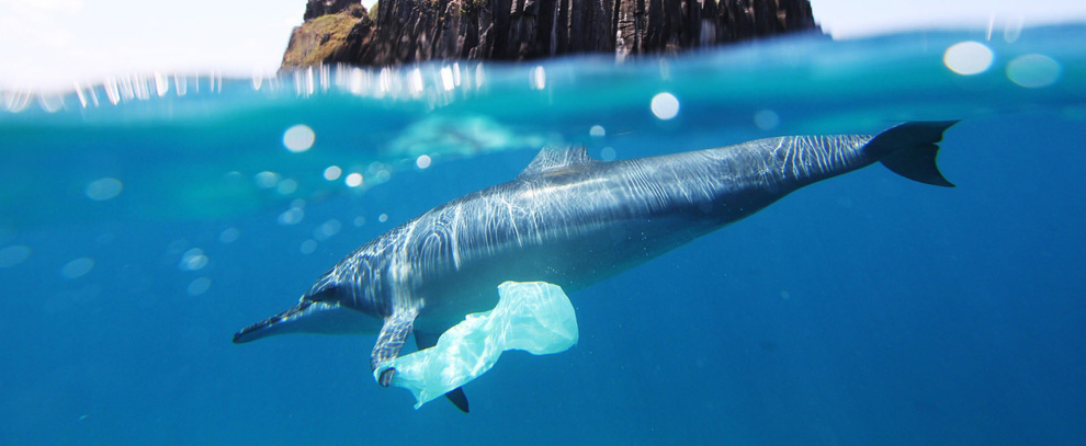 Dolphin with plastic bag. Attribution: Jedimentat44, https://www.flickr.com/photos/jedimentat/7576773812; cropped to letterbox; https://creativecommons.org/licenses/by/2.0/